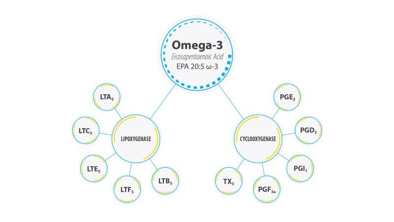 omega3_diagram_8